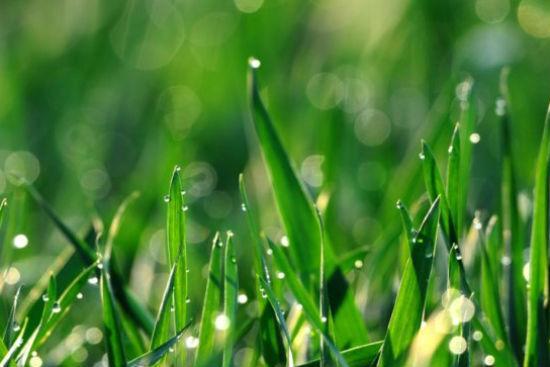 谷雨的由来 谷雨的物候特征