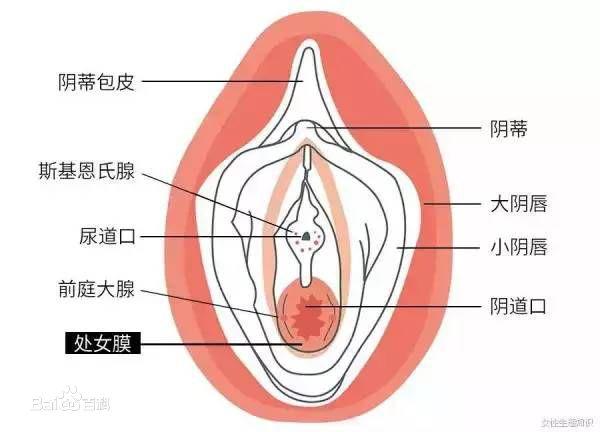 什么是处女膜,处女膜是什么样子!