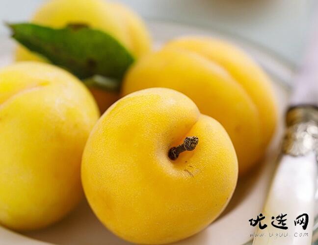杏的功效与作用及禁忌