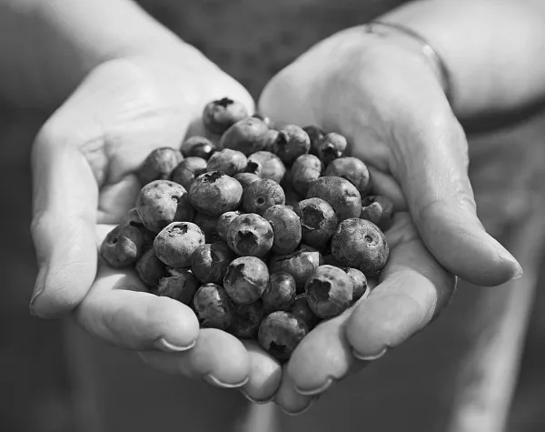 蓝莓有什么功效?蓝莓的5大好处