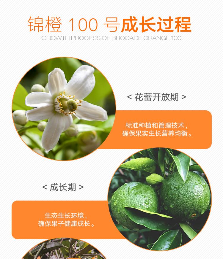 收获的季节,忠县橙香飘满两岸,其中的每一颗都聚集了果农的精诚之心