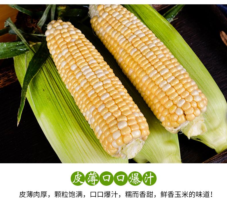 新鲜采摘的玉米