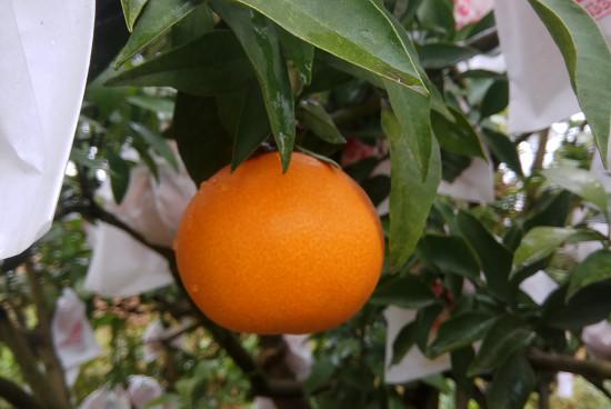 派森百橙汁多少钱一箱