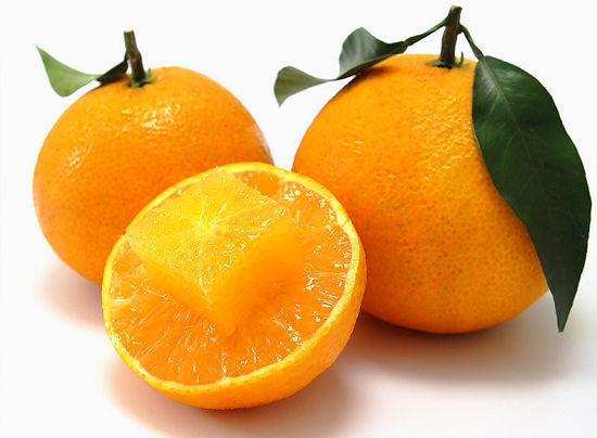 爱媛橙子的介绍