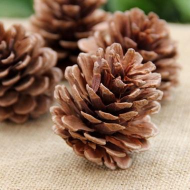山货松果 大松果松塔 圣诞节日松树装饰用品 干花摆件吊坠 拍照道具50个