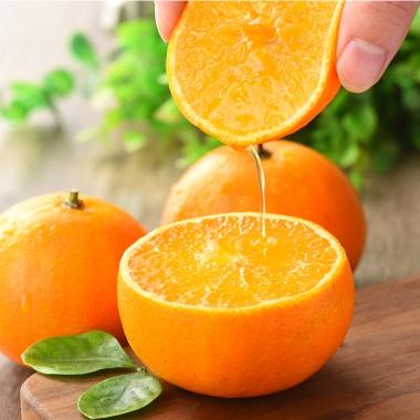 柑橘爱媛产地是哪里