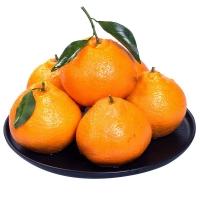 耙耙柑好吃的春见柑桔品种 长江三峡库区多雾水份充足的水果5斤