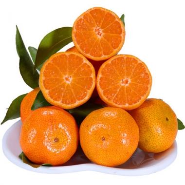 金秋砂糖桔 正宗沙塘桔新鲜水果价格实惠全国速达
