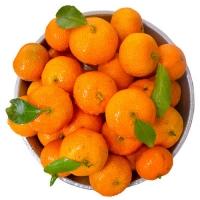 正宗金秋砂糖橘新鲜水果纯甜的桔子当季小蜜橘整箱